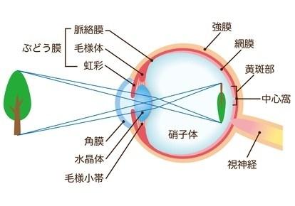 目の仕組み
